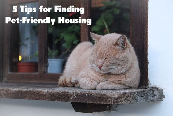 5 Tips for Finding Pet-Friendly Housing