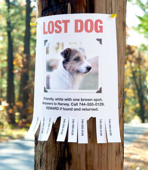 Finding your Missing Dog or Cat