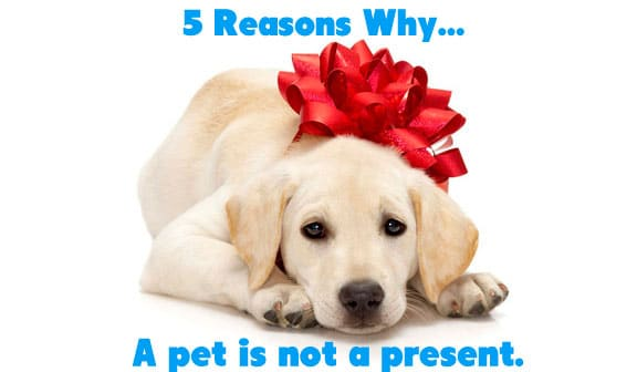 5 Reasons why Pets are Bad Gifts