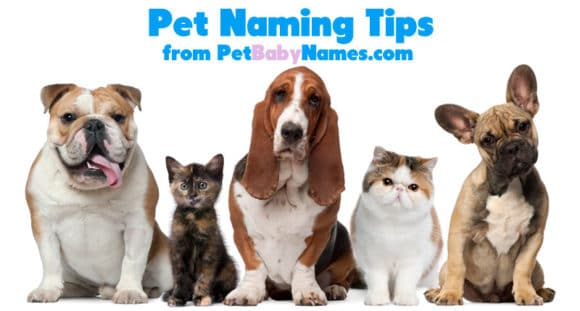Naming Tips for Pets