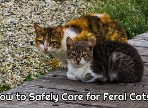 Safely Caring for Feral Cats