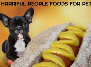 7 Harmful People Foods for Pets