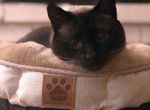 Review: Petmate SnooZZy Pet Bed