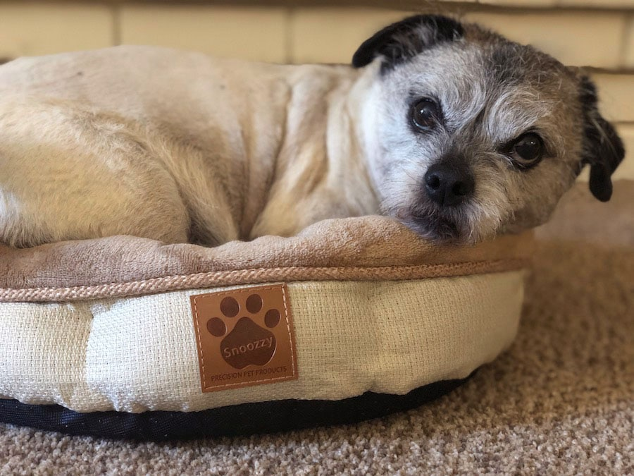 SnooZZy Pet Bed Review