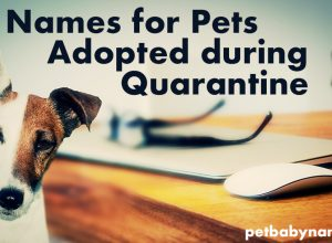 Names for Pets Adopted during Quarantine