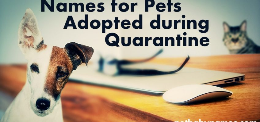 Names for Pets Adopted During Quarantine - Dog and Cat at Desk