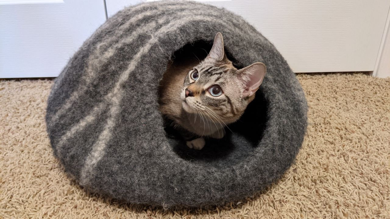 Cat inside of a MEOWFIA cat bed cave