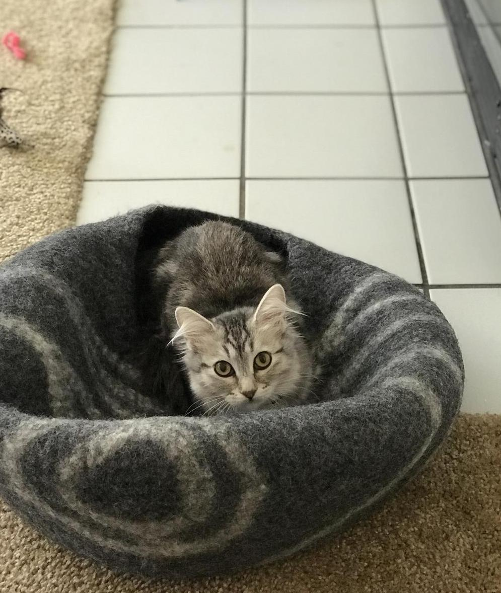 Cat in a collapsed MEOWFIA cat cave