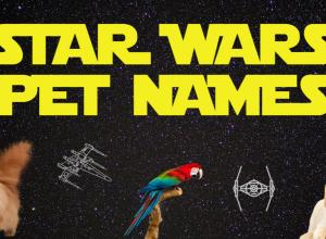 Star Wars Pet Names