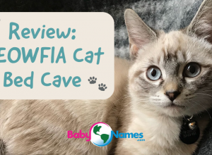 Review: MEOWFIA Cat Bed Cave
