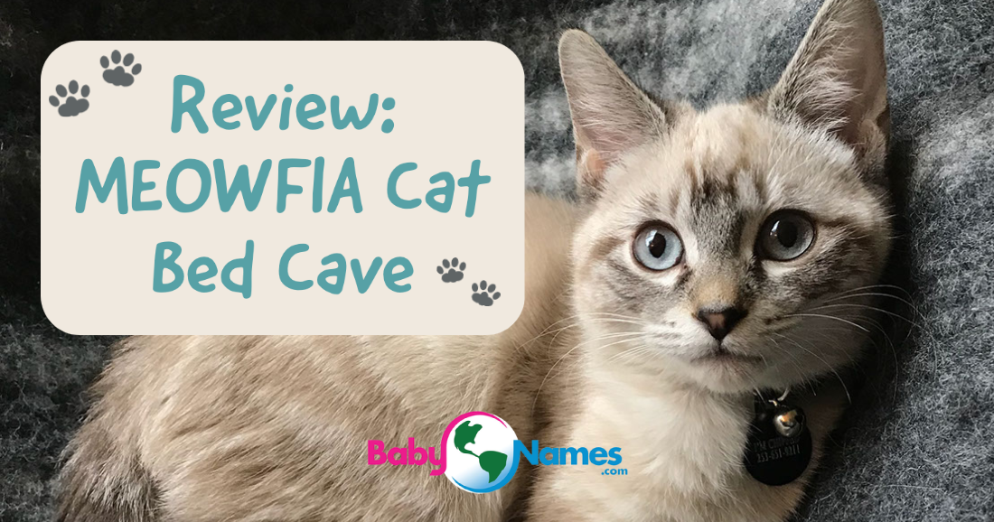 Review: MOWFIA Cat Bed Cave