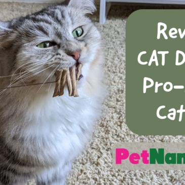 Review: CAT DANCER Pro-Model Cat Toy