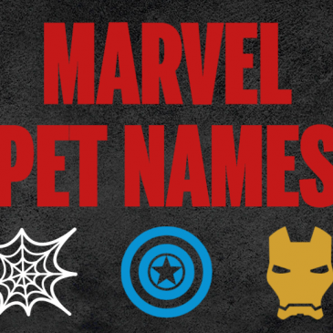 A title image that says Marvel Pet Names and has superhero icons.