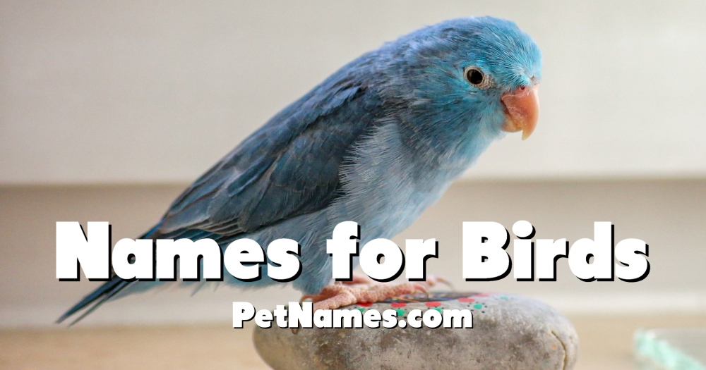 A photo of a small blue bird with the title Names for Birds.