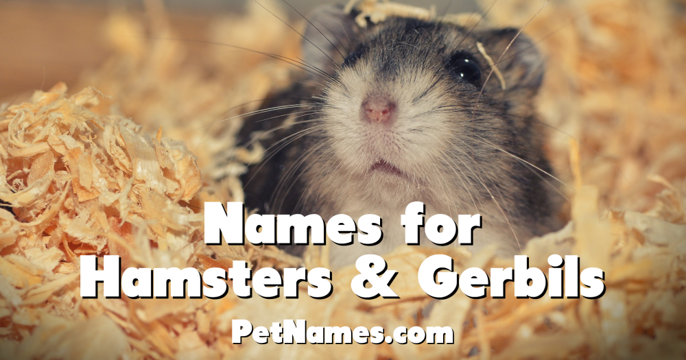 A photo of a hamster with the title Names for Hamsters and Gerbils.