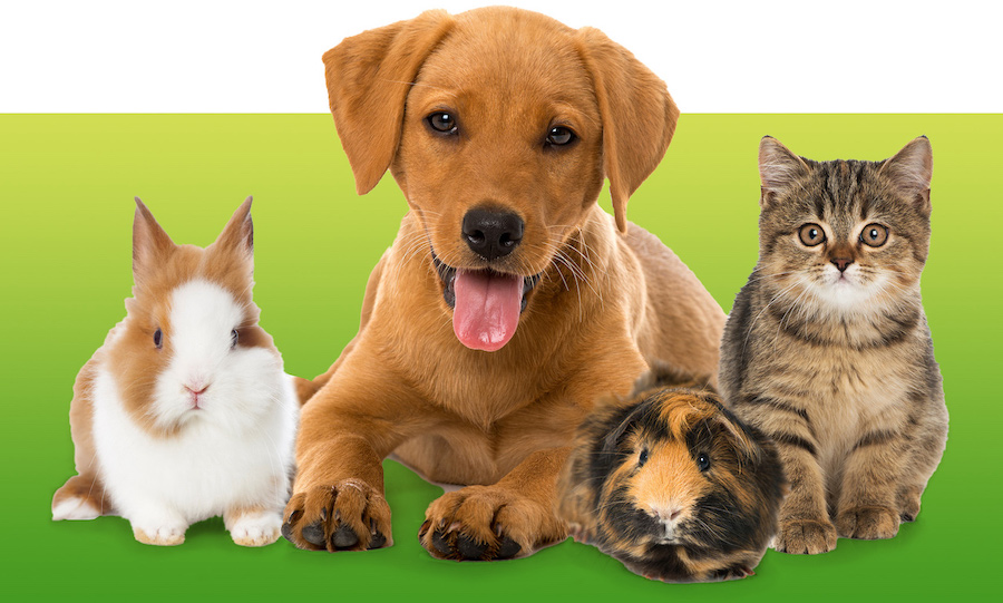 Bunny, Puppy, Guinea Pig, and Kitten
