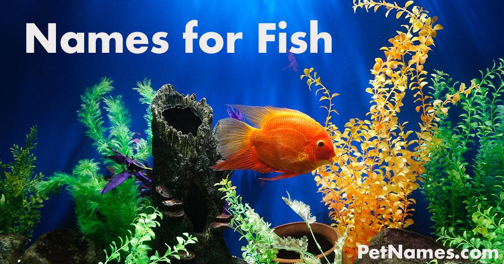 Names for Fish: Orange Fish in Fish Tank