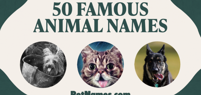 The title says 50 Famous Animal Names with three images below: a dog in an army helmet, a cat, and another dog.